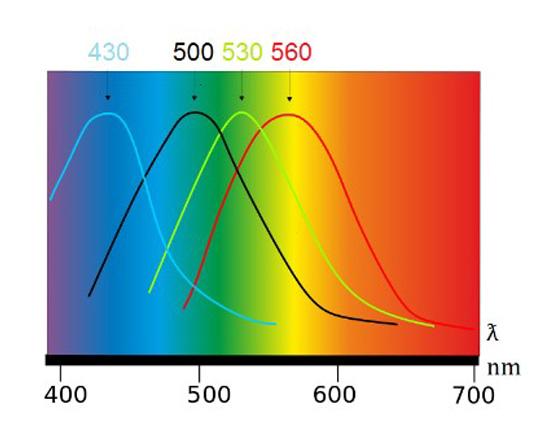 oligoscan-graphique